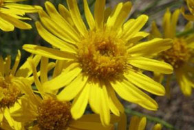 Learn about local wildflowers, grasses, shrubs and trees.