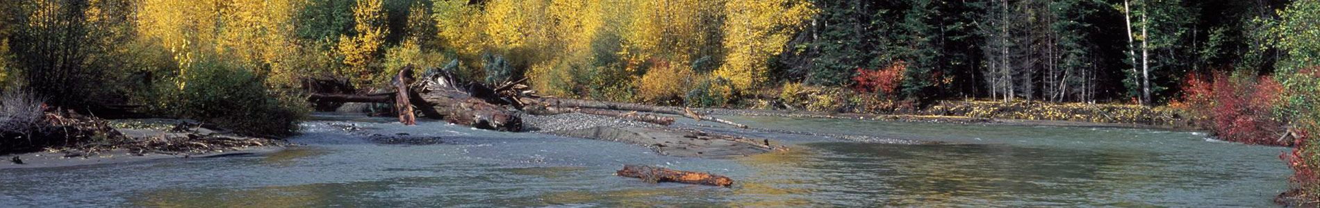Nason Creek - critical salmon habitat