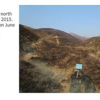 Post-fire Plant Monitoring